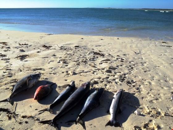ismerkedés madagaszkári nő photo)